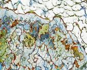 artist austin tx glacial series